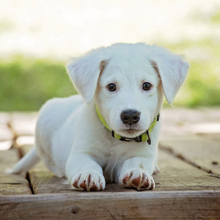 Baby Dog Pictures