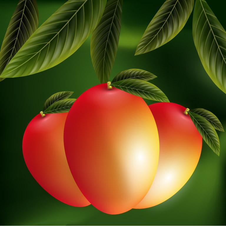 Vector Mango Background Template